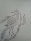 Bird Papoulidis